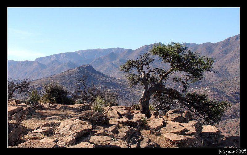 морокко, дерево арганы, берберы. Берберская крепость 2photo preview
