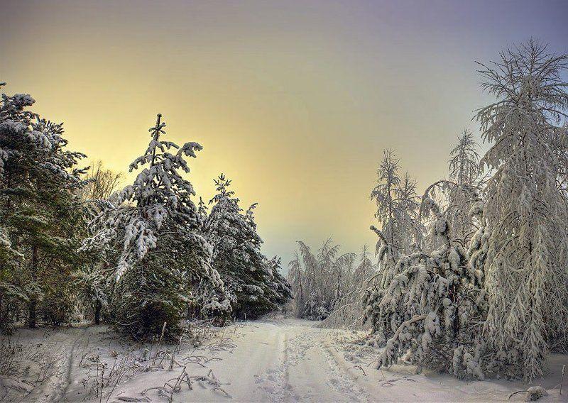 деревья, снег, зима, небо, пейзаж, ели Волшебный лесphoto preview