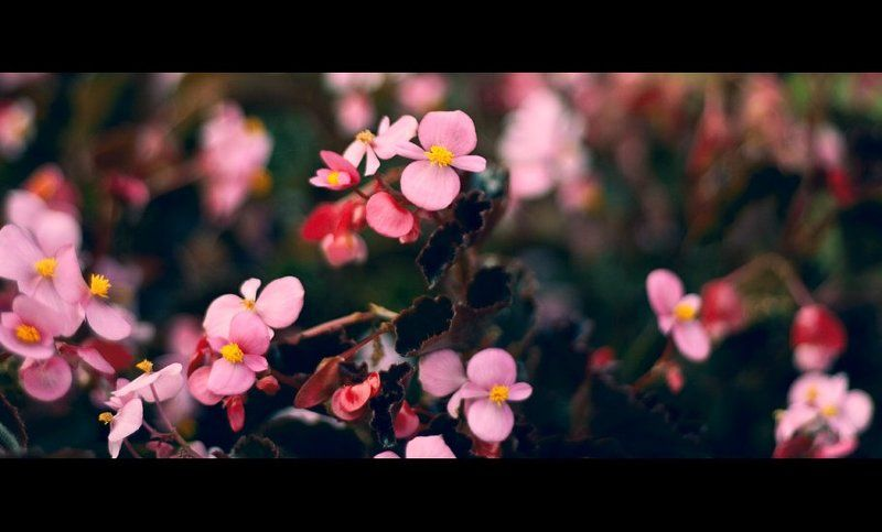 цветы flowers Iphoto preview