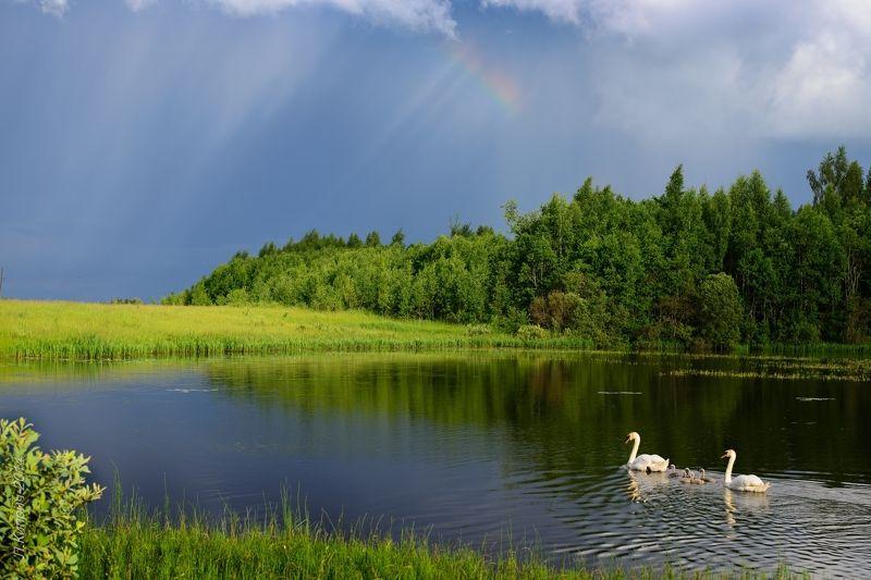 landscape, времена года, landscape, russia, sommer, водная гладь, голубая вода, грация, лебеди,  радуга, россия, свет, тень, смоленская область, Идиллияphoto preview