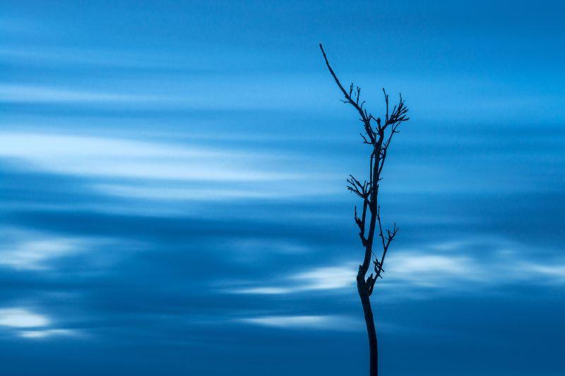 Ветка, Вечер, Дерево, Закат, Небо, Облака Одиночествоphoto preview
