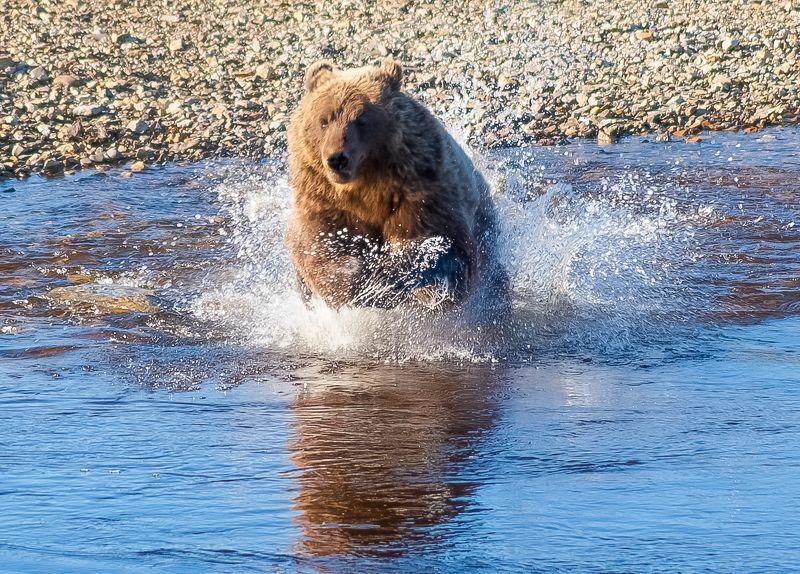 Бегущий по водеphoto preview