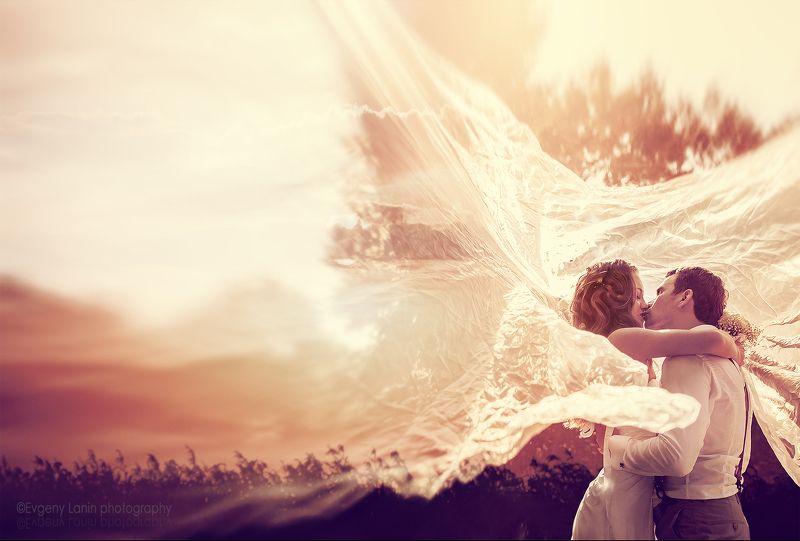 невеста, жених,фата, поцелуй Поцелуйphoto preview