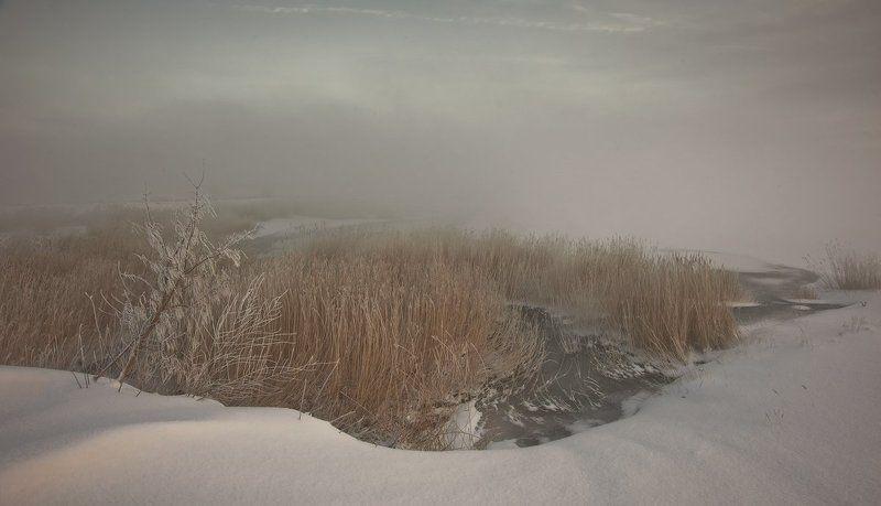 зима, камыш, снег, туман ***photo preview