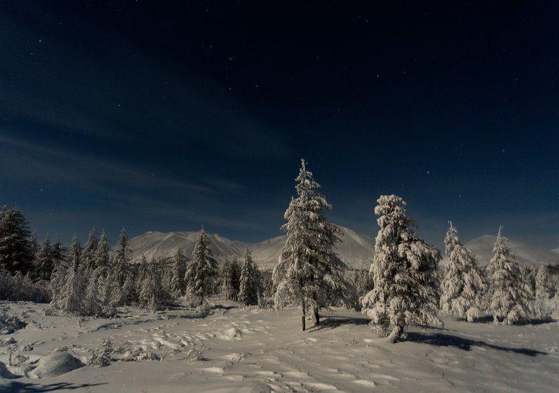 Звёзды, Зимний лес, Ночь, Природа Лунная ночь в горахphoto preview