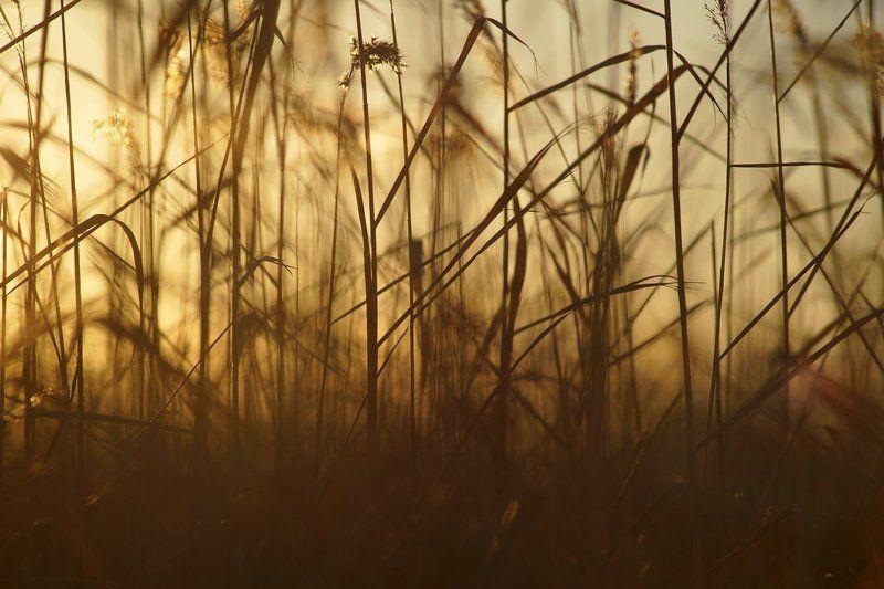 трава, свет, закат, вечер В вечерней травеphoto preview