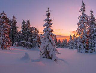 В объятиях зимы