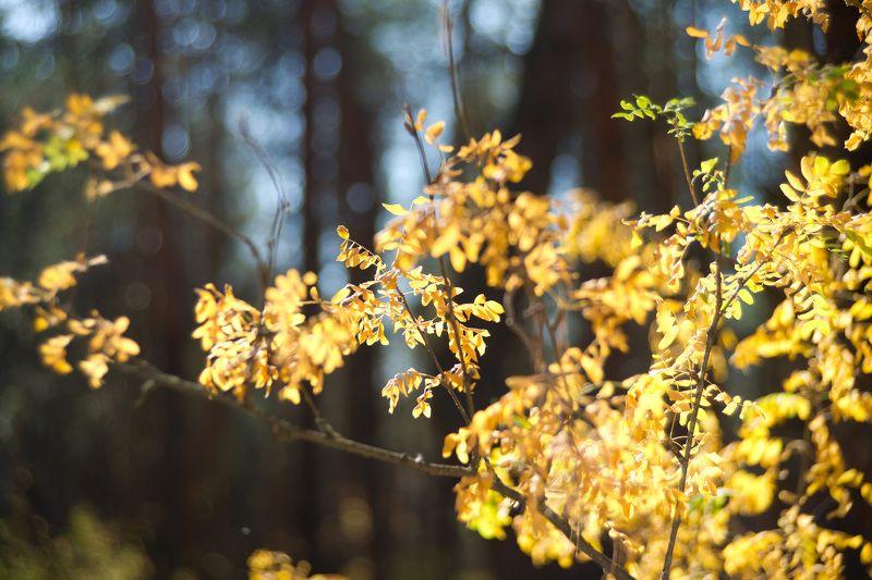 золото лесаphoto preview