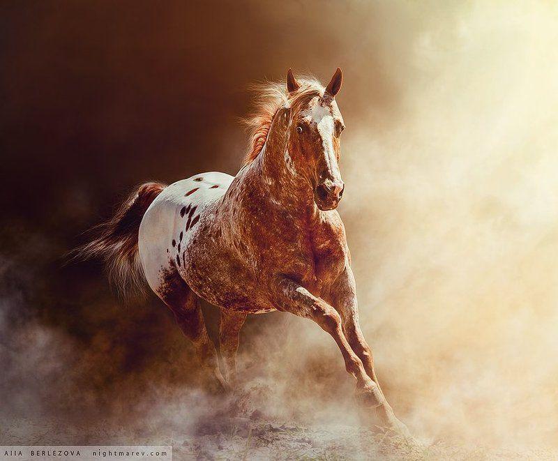 Appaloosa dust fog horse mist ап UT Spurs For Olenaphoto preview