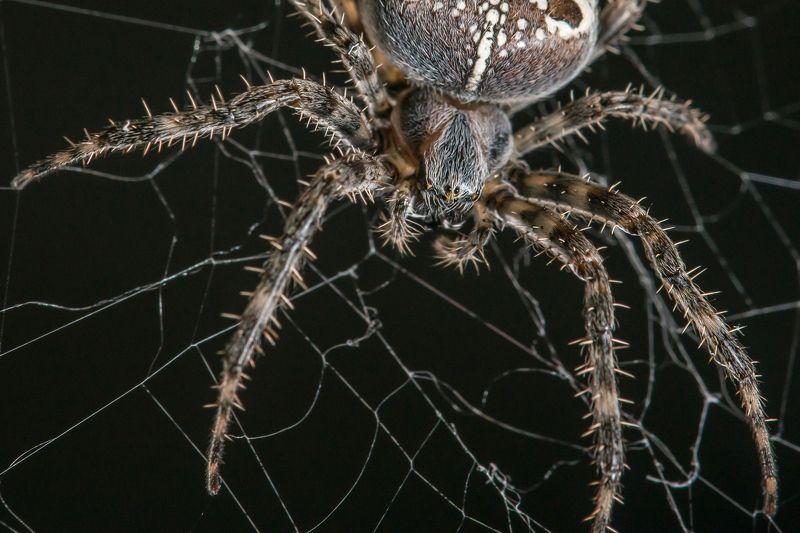 паук, паутина, лыпы, жуть В ожидании обедаphoto preview