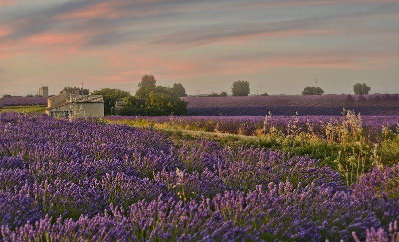 лаванда поле вечер красота цветение фиолет даль волны переливы Расскажу Вам о лавандовых полях,Как играют на волнах их переливы...photo preview