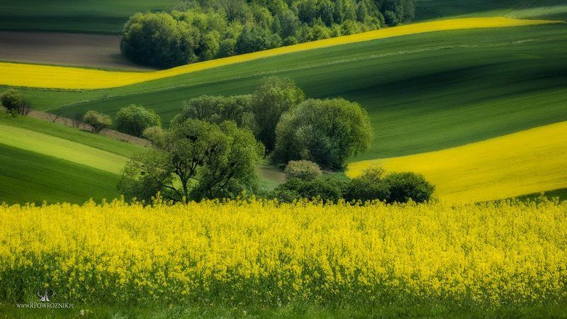 rpowroznik, nature, landscape, fields, light, trees green & yellow...photo preview