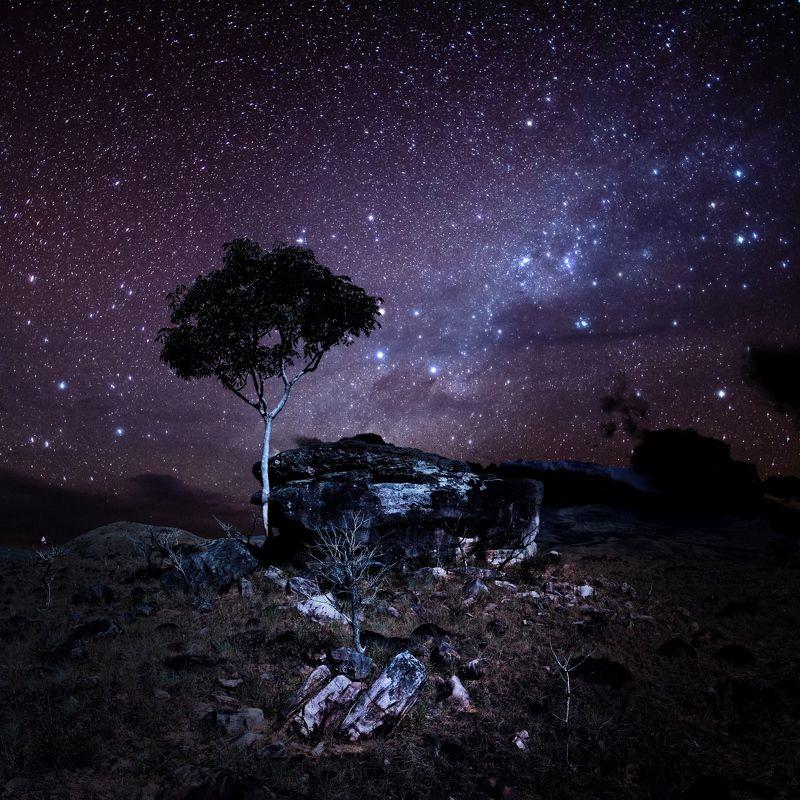 путешествия,природа,венесуэла,ночь,звёзды,дерево,камни,небо,млечный путь photo preview