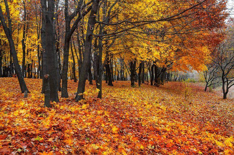 sergei lysenko, Ukraine