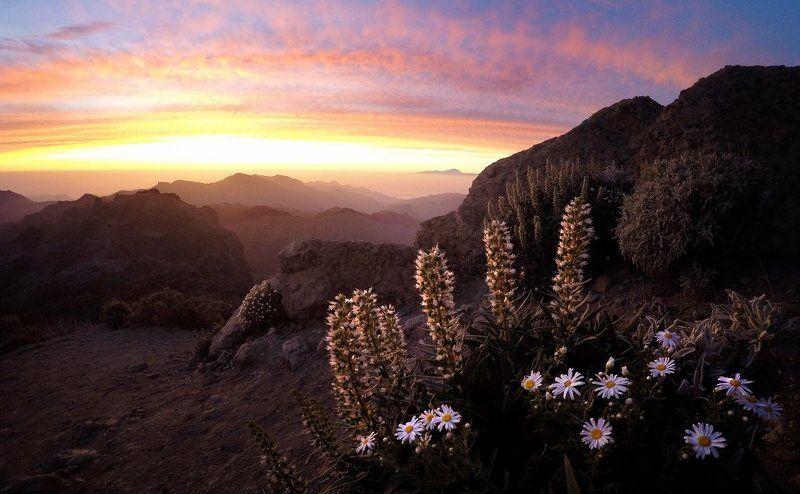 Гран канария, Закат, Канарские острова, Солнце, Цветы Канарыphoto preview