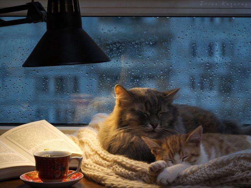 Дом, Окно А у нас сегодня лил дождь...photo preview