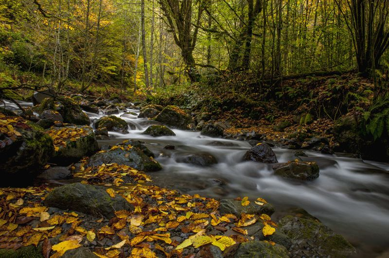 AUTUMN IN DEEP WOODphoto preview