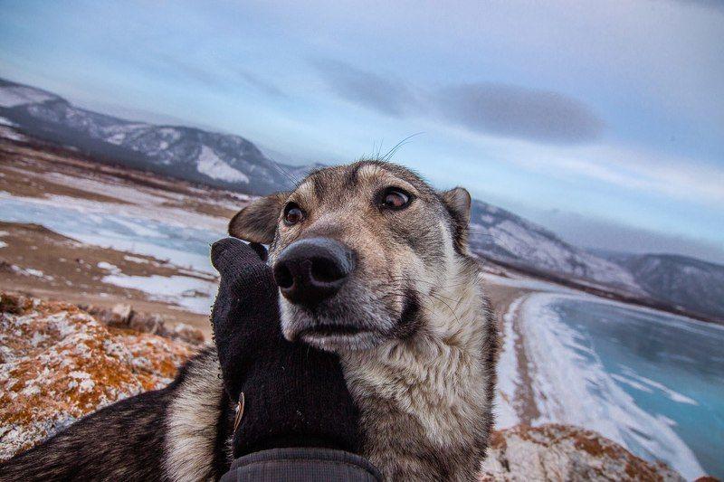Байкал, Иркутск, Красноярский край, Пёс, Россия, Сибирь, Цаган-Хушун Байкальский пёсphoto preview
