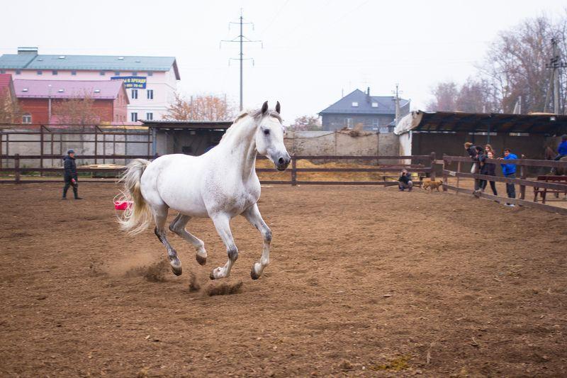 Станислав, Russia