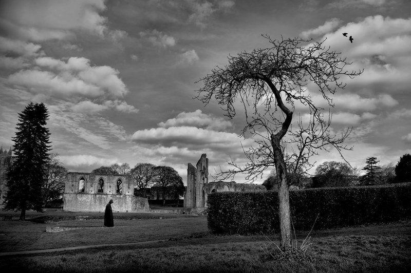 Glastonbury Abbey...photo preview