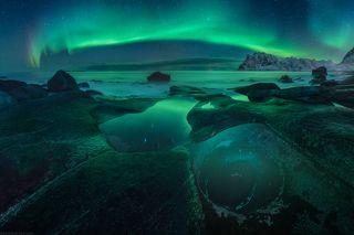 Avocado aurora