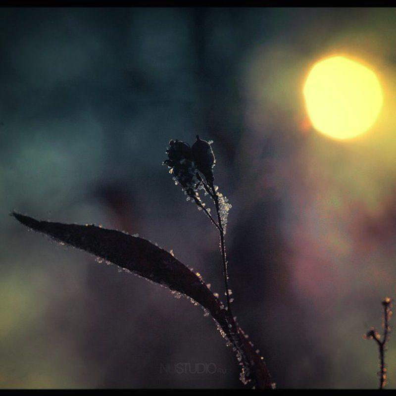 *Закат*photo preview