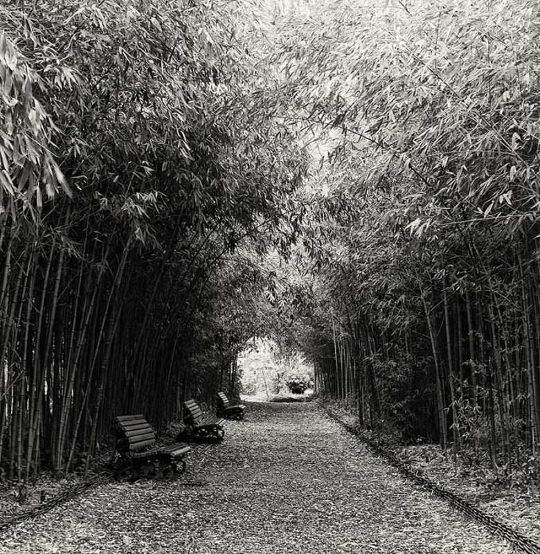 абхазия,ботанический сад,аллея,бамбук, скамеечки,зима * * *photo preview