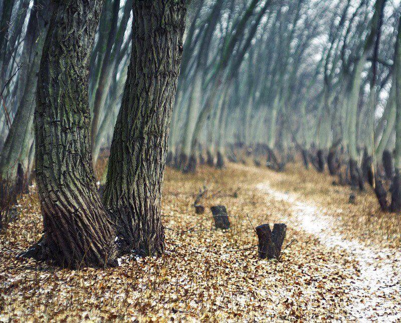 деревья, тропа, зима, листья Тропинка.photo preview