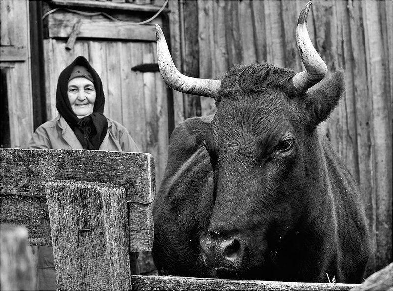 деревенская жизнь, илья шалафаев, shalapai-art Деревенская жизньphoto preview