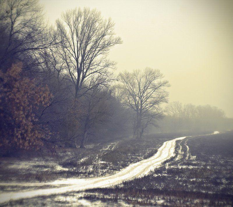 зима, деревья, шёпот, молчание, туман, дорога, тропинка, лес, волгоградская область Шёпот.photo preview