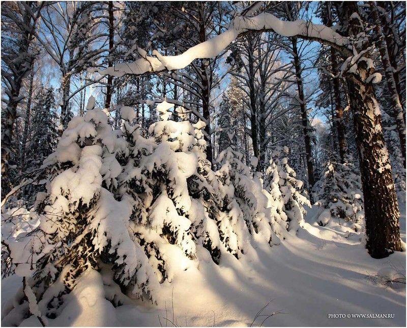 зима,снег,лес,salman, сказкаphoto preview