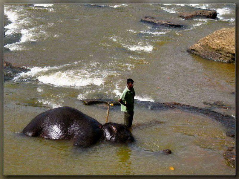 шри-ланка,слон,слоновый питомник Ну и что теперь с ним делать?..photo preview