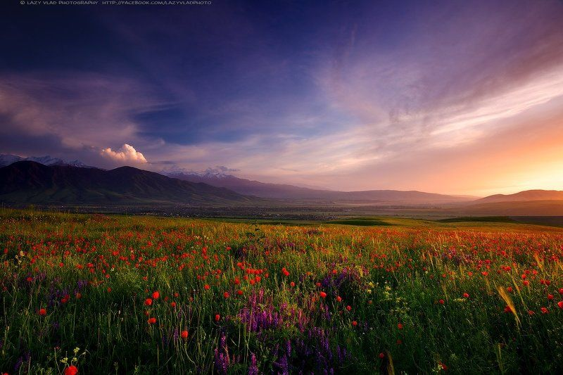 lazy_vlad, lazyvladphoto, nophotoshop, bishkek, kyrgyzstan, landscape, mountains, poppies, spring, бишкек, киргизия, кыргызстан, горы, маки, весна Королевство вечной Весныphoto preview