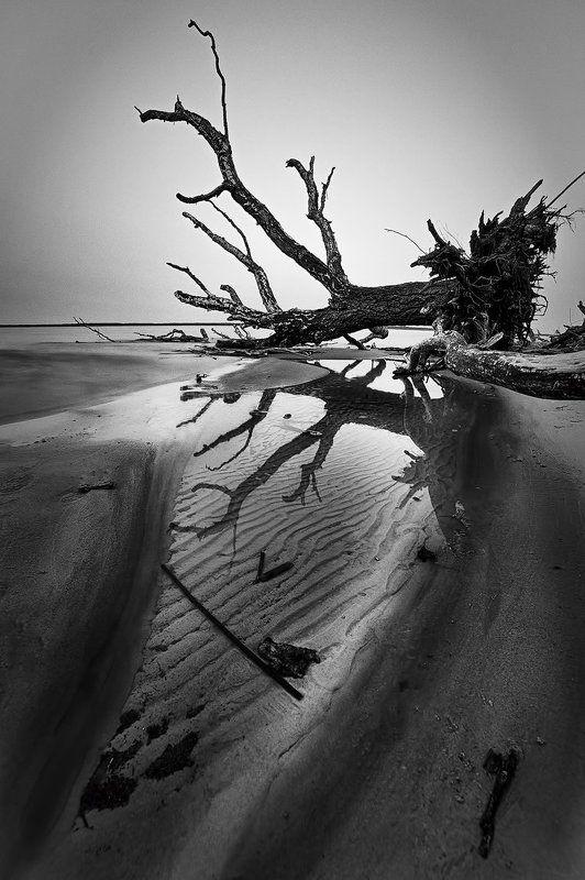 tree,landscape,Rolandas Sutkus, В сердце веет холодомphoto preview
