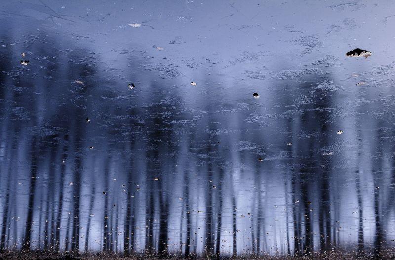 отражение, лёд, силуэты, деревья Зазеркальный лесphoto preview