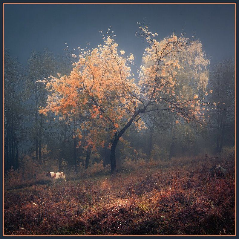 Осень Осенняя прогулкаphoto preview