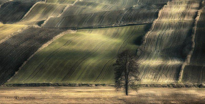 rpowroznik, landscape, fields, light, scenery, tree, canon fields...photo preview