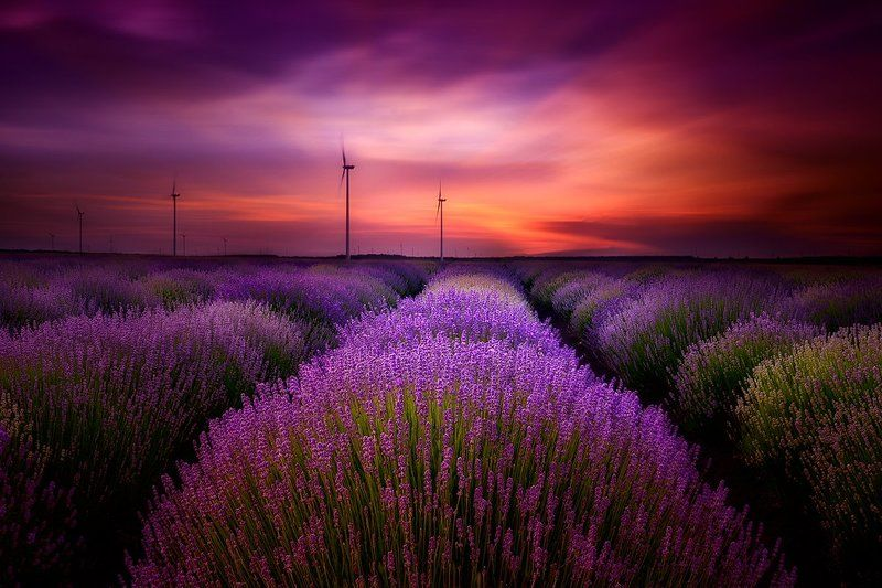 lavender, sunset, bulgaria, purple, sky, clouds ***photo preview