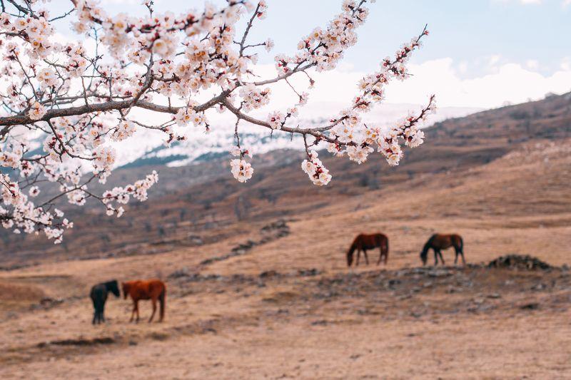 Весна, Дагестан, Кавказ Привет, Весна! фото превью