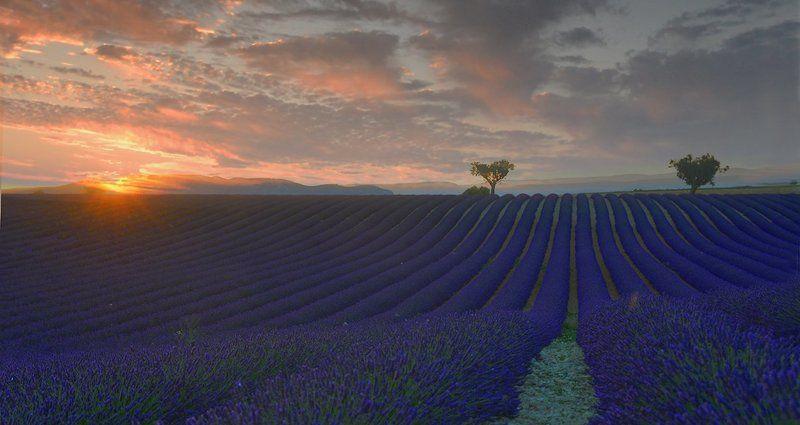 закат, лаванда, поля, фиолетовые, волны, тишина, умиротворение, красота, даль, деревья, облака Лавандовый рай.photo preview