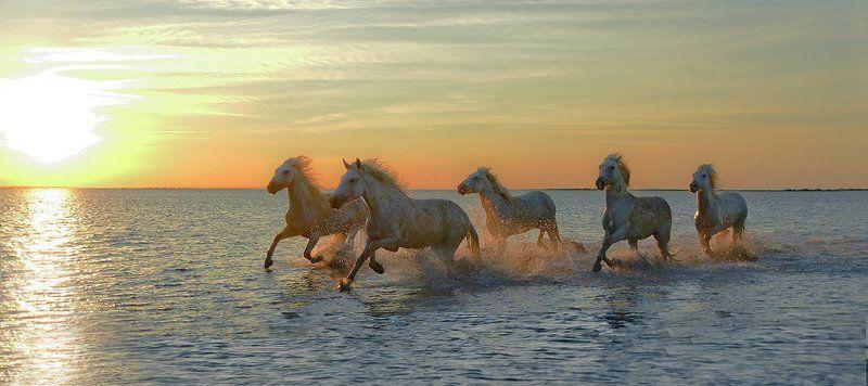 утро море вода кони табун брызги галоп солнце синь восход красота Бег морских конейphoto preview