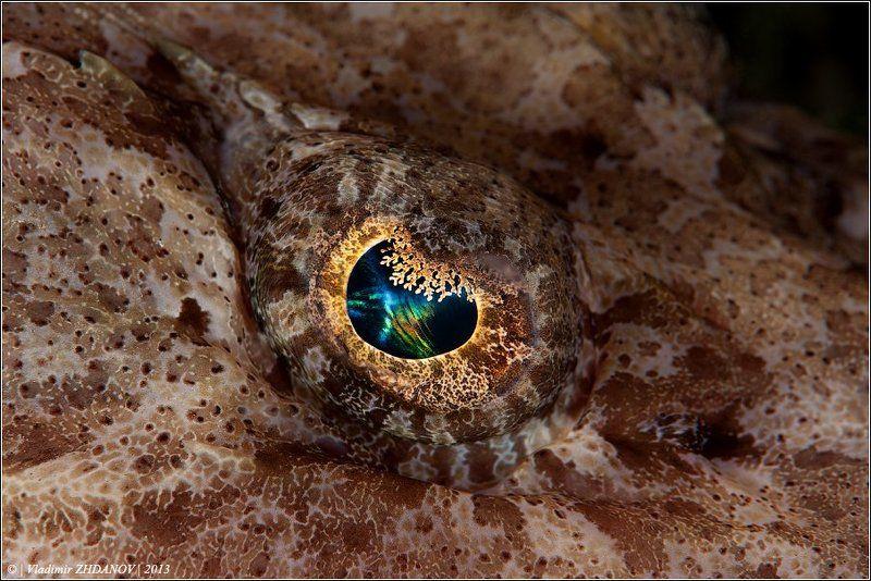 Всевидящее Око Хозяйки Лайтхауса, или про фото-штампы в подводной фотографииphoto preview