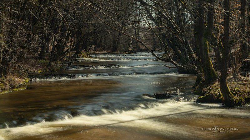 rpowroznik, nature, reserve, scenery, Roztocze, Tanew, river nature reserve...photo preview