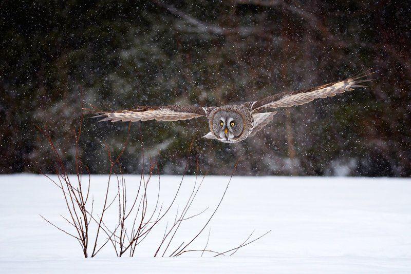 летит сова...photo preview