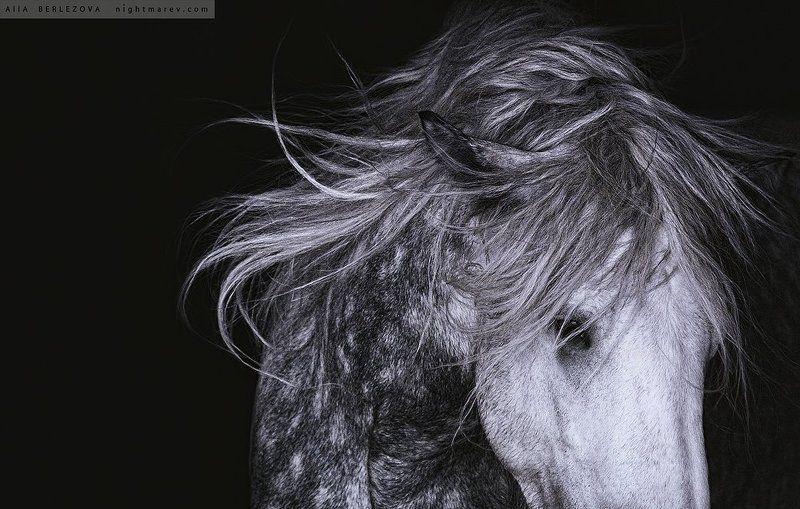 Black and white, Horse, Mane, Portrait, Грива, Лошадь, Портрет, Черно-белое Jimbophoto preview