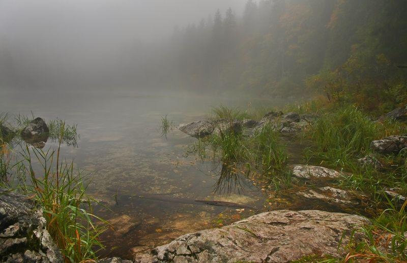 осенью на болотахphoto preview