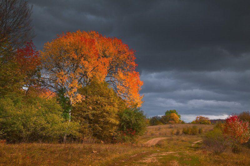 Осень Мезмай Забытая осеньphoto preview