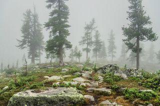в туманном лесу я бродил...