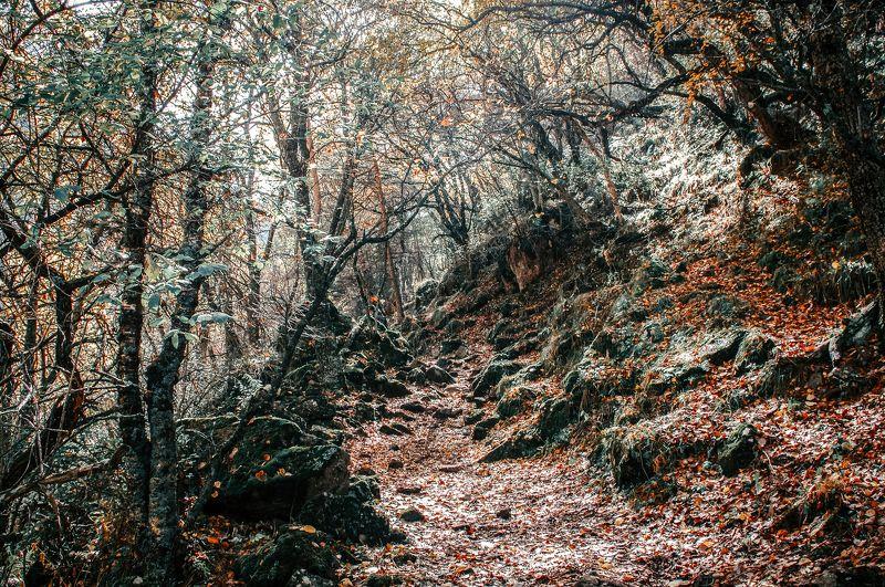 В горном лесу photo preview