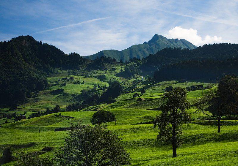 горы альпы швейцария mountains alps switzerland meadow Альпийские лугаphoto preview